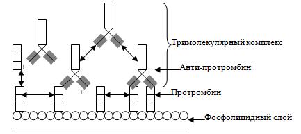 Патогенетическое значение антифосфолипидных антител